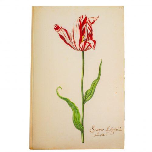 Het Tulpboek, Nicolaes Tulp